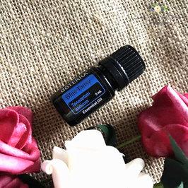 现货 美国doTERRA多特瑞Blue Tansy 蓝艾菊 单方精油5ML舒缓肌肤